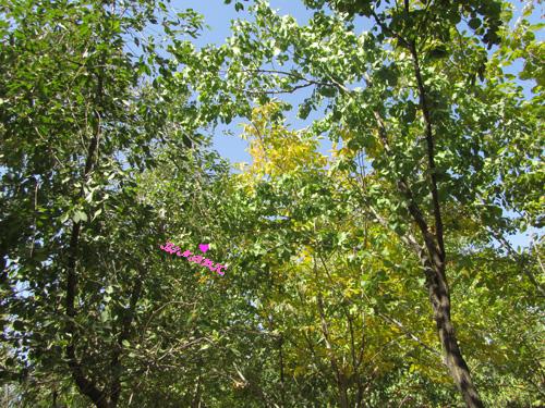 باغچه روستا همدان درخت گردو