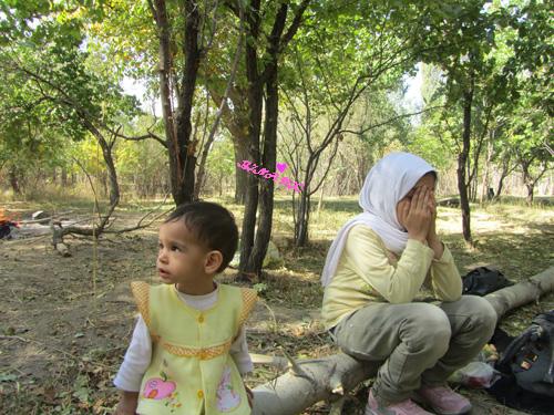 باغچه روستا همدان درخت گردو صفاری